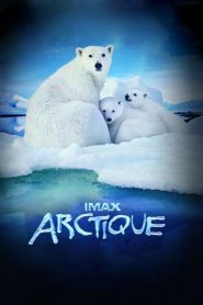Arctique papystreaming